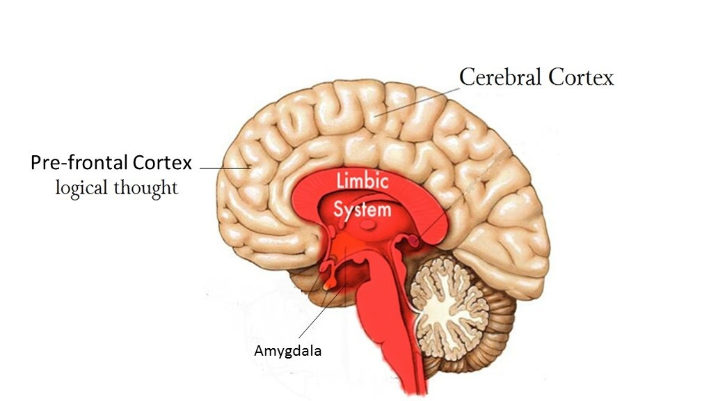 The Brain Behind Performance - Ayesha Jahan Bibha